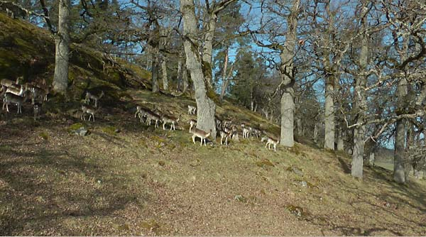 Hjortar i Gripsholmshängnet